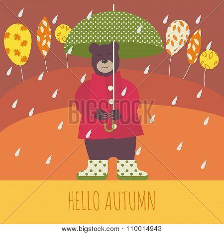 Bear in autumn
