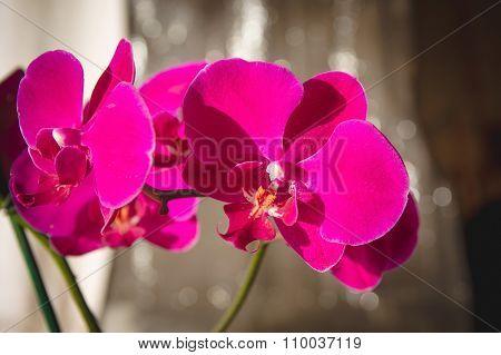 Purple Orchid On Dark Background