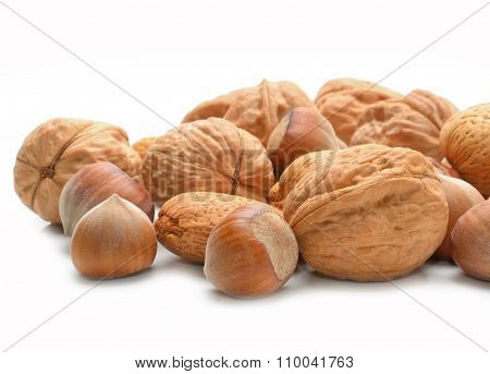walnuts and hazelnuts islated on white background in studio poster