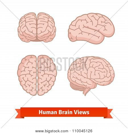 Human brain views. Top, frontal, side.