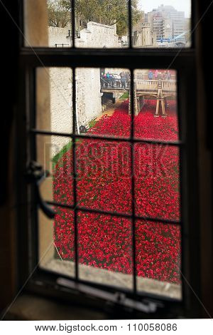 05 Nov 2014, London, England - Remembrance Day at Tower Of London. Ceramic Poppies installation