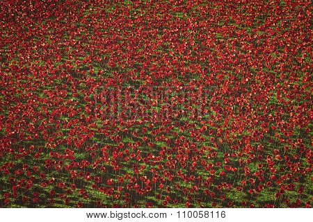 12 Nov 2014, London, England - Remembrance Day at Tower Of London. Ceramic Poppies installation