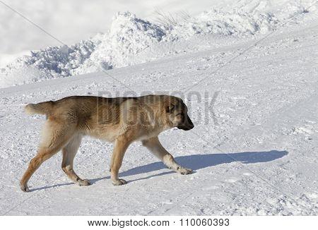 Dog On Snowy Ski Slope At Sun Day