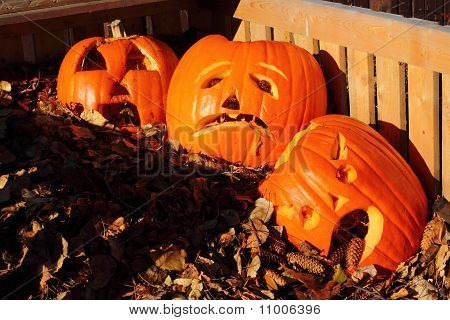 Pumpkins Crying In A Compost Bin