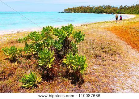 Tropical beach on Ile Aux Cerfs Island ( Mauritius Island), blue sea and sunny sky on a background. Greeting from paradise.