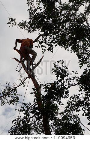 Risk Of Lumberjack