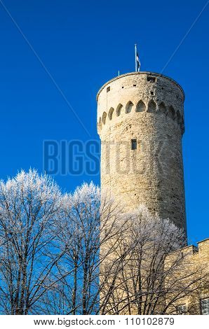 View Of The Tower Long Herman  In Tallinn