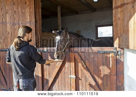 English Thoroughbred Racehorse In Box 02