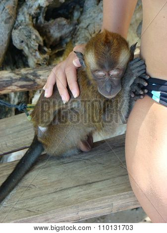 Sleeping Monkey On His Feet In The Open Air Tourist