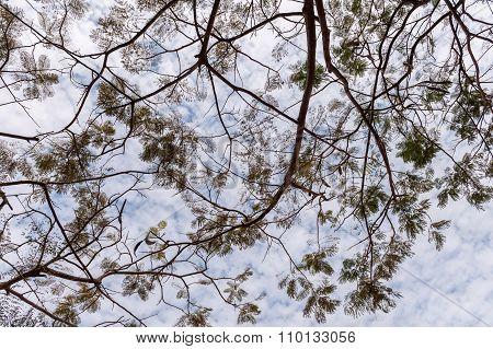 Branch leaves