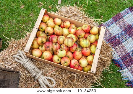 Apples in box