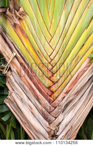 Brown palm leaf