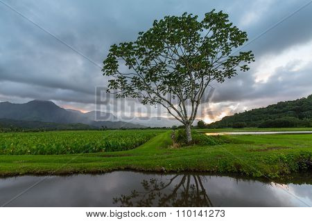 Panoramic View Of Hanalei Valley In Kauai