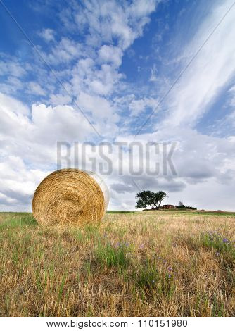 Cut Field Vertical Landscape