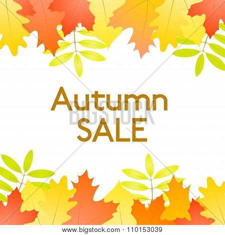 Autumn Sale - Vector White Background With Autumn Leaves At The Top And At The Bottom