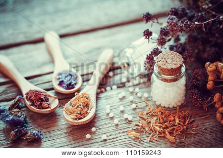 Bottle Of White Homeopathy Globules, Wooden Spoons And Dry Healthy Herbs. Retro Styled.