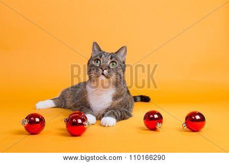 Merry Christmas Time