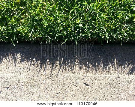 Beautiful natural grass shadow