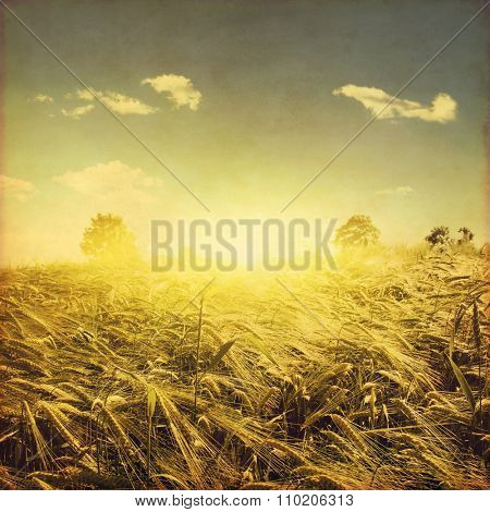 Wheat field and at sunset in grunge and retro style.