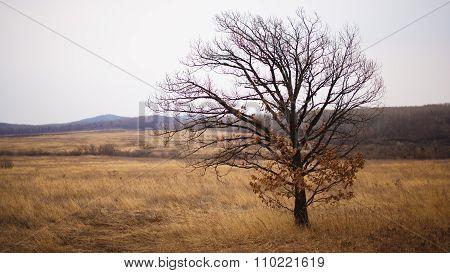 Lonely tree in field in the wind.