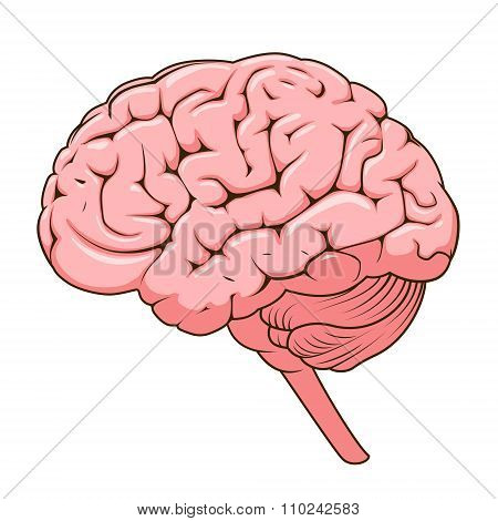 Structure of human brain schematic vector