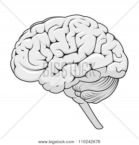 Structure of human brain schematic vector illustration. Medical science educational illustration poster