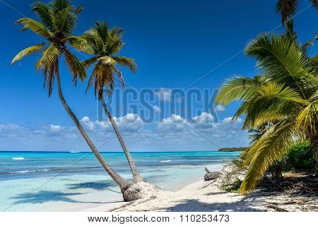Tropical Beach With Palm Trees And White Sand..