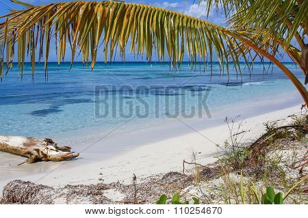 Caribbean Sand Beach With Palm Trees Leaves, Crystal Water And White Sand