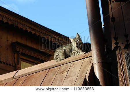 Mother cat with baby kitten on the wooden authentic roof