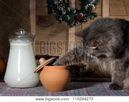 The cat steals food from the clay pot