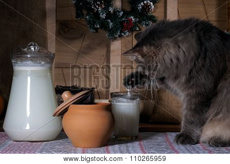 Arrogant, cunning cat stealing milk from a glass paw