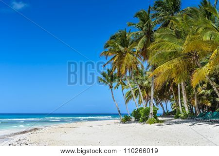 Sandy Caribbean Beach With Coconut Palm Trees And Blue Sea