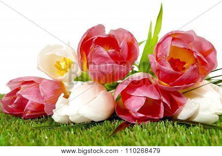 Bouquet Of Spring Tulips On A Greenl Grass/ Space For Text.