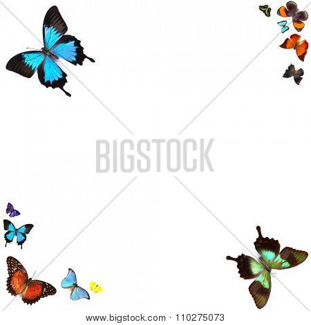 Butterflies, isolated on white