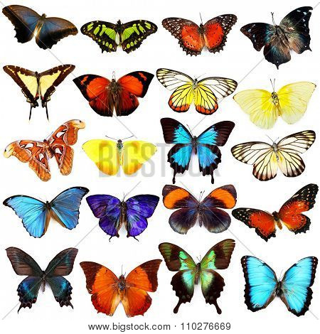 Butterflies collection, isolated on white