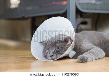 Sick Cat With Veterinary Cone Collar Prevent Him Scratch His Ear