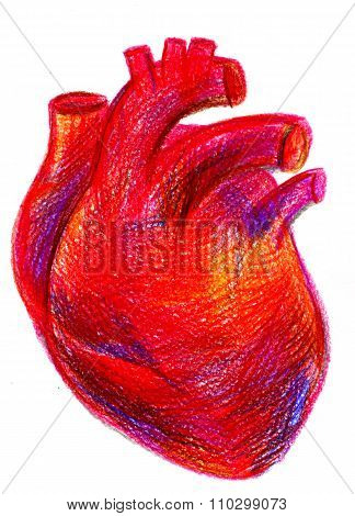 Multicolored Red-blood Heart Pencil Drawing