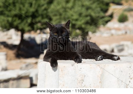 Cat over Pillar in Ephesus Ancient City in Izmir Turkey poster