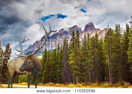 Fantastic deer with branchy horns on an edge of coniferous forest. Magnificent multi-colored