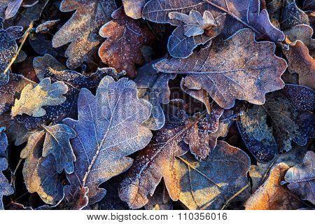 nice oak's frozen leafage closeup photo