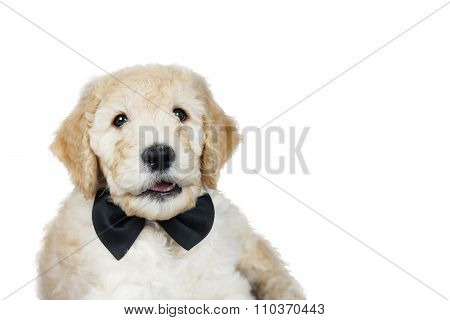 Cute Puppy Over White