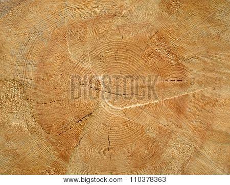 Brown Sawed Wood Log End Natural Background