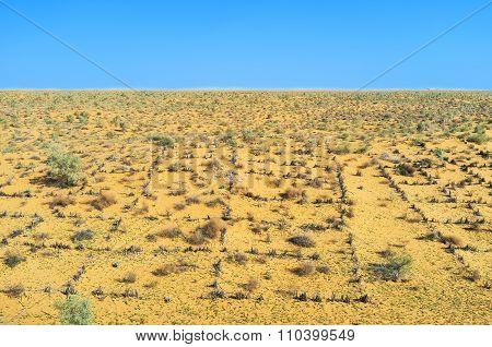 The Uzbek Desert