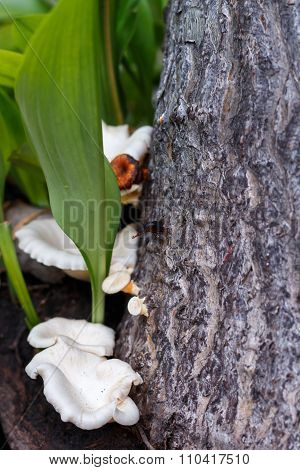 Mushrooms on the tree on white background