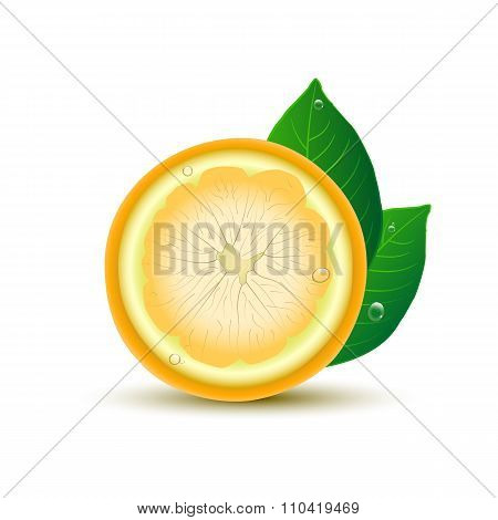 Abstract Lemon With Leaves And Drops On White Background.vector