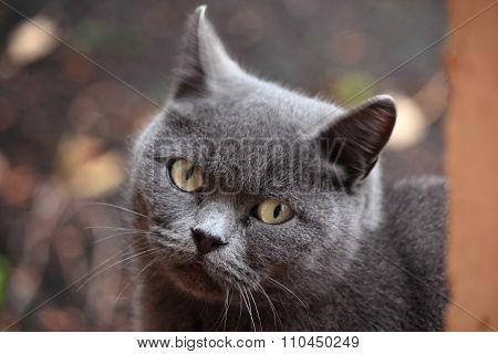 Careful look cat.
