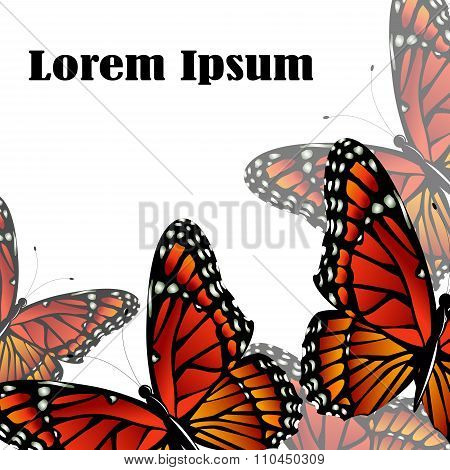 The Monarch butterfly  vector background