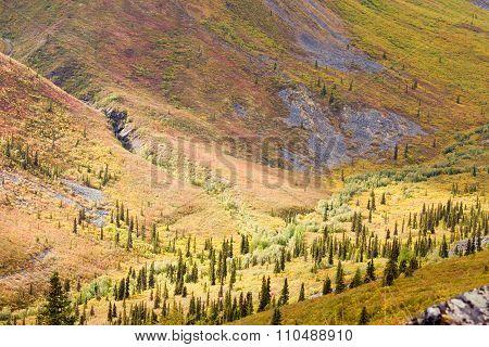 Alpine Tundra Habitat In High Mountain Valley