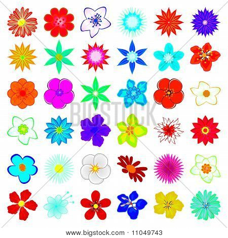 A collection of flowers for the design
