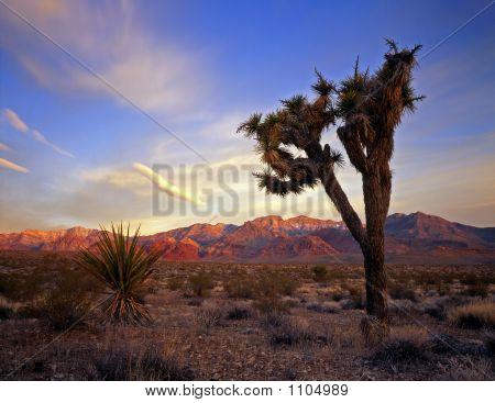Mojaveyucca&Desert